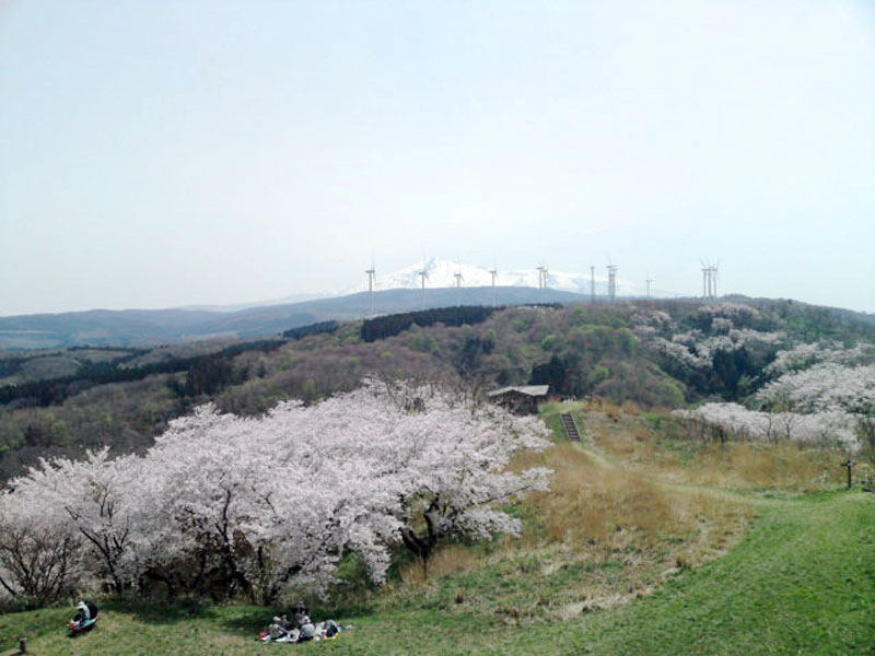 秋田県由利本荘市西目『浜館公園』の風景