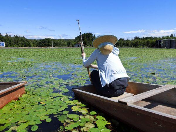 青空の元じゅんさい沼に浮かべた小舟に乗っている様子