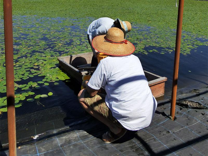 じゅんさい沼の水際で、小舟の後ろを人に支えられに乗り込む様子