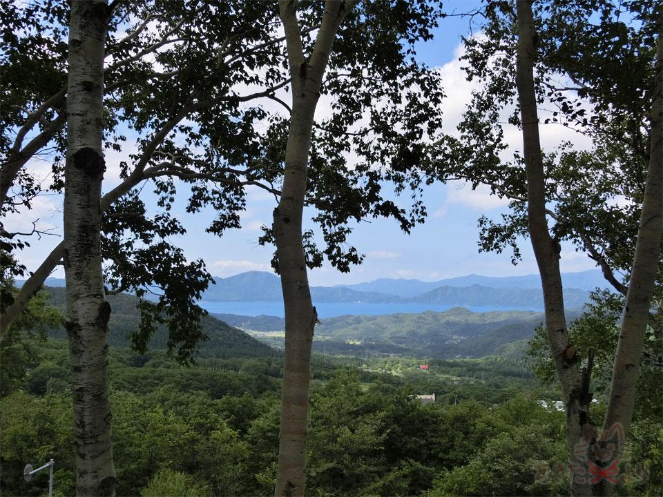 手前に白樺の木々が映り、奥の方に田沢湖が見える