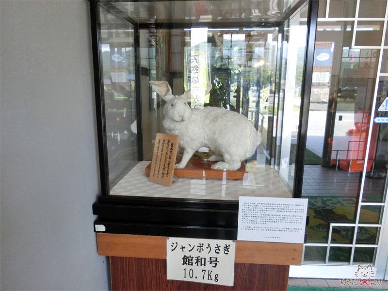 入り口のところに展示されていた白いジャンボうさぎ
