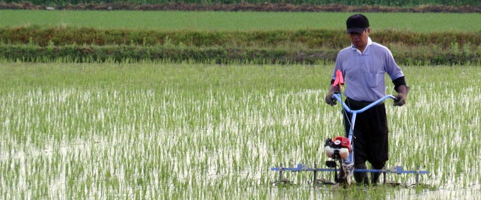 農家さんが田んぼで作業をしている様子