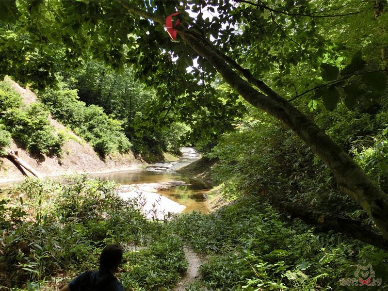木々の隙間から川が見える