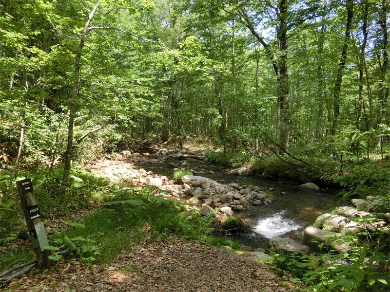 森の中には川が流れ、右に渡るための飛び石、左に木の道案内がある