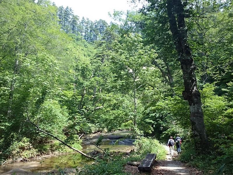 1枚岩盤の上を流れる浅い川沿いの道