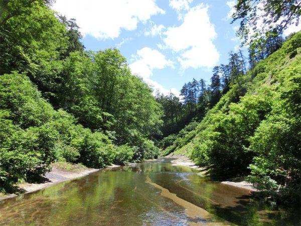 夏の新緑まぶしい渓谷の様子