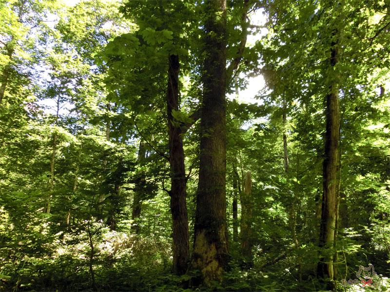 木々で空が覆われているため、心地の良い日陰の道になっている様子