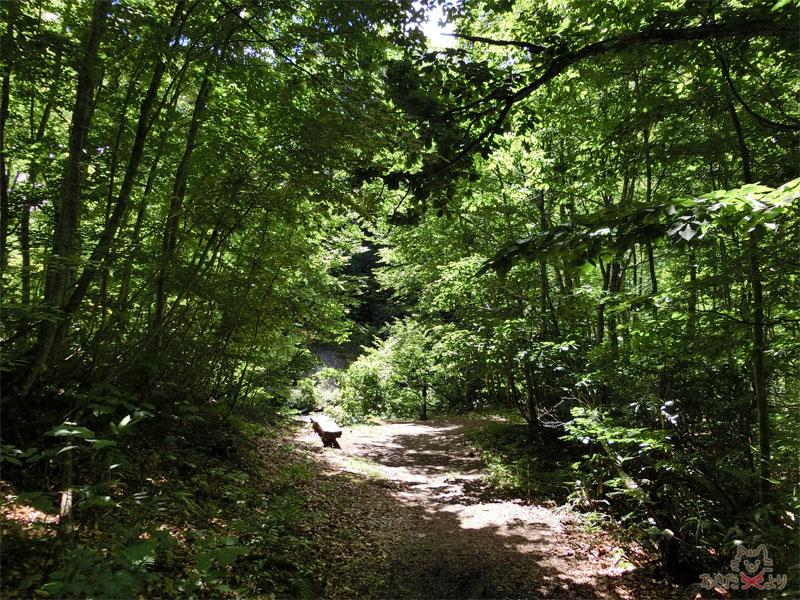 桃洞の滝と赤水渓谷との分岐点にあるベンチ