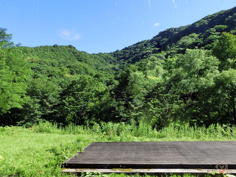 朝食会場『白糸』の窓から見える景色、とにかく森で清々しい!