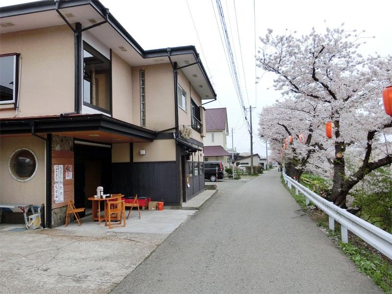 太平川の堤防の桜並木、そばや『三㐂』がある。