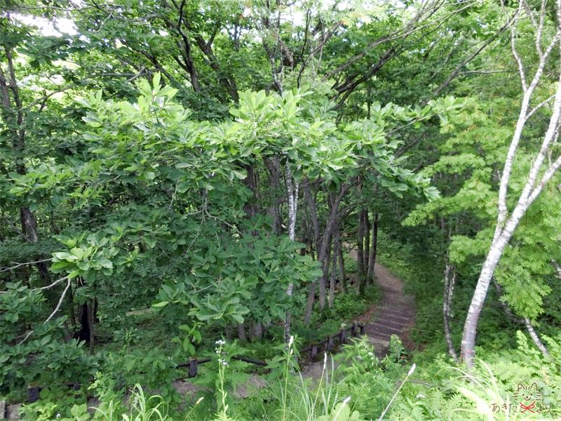 写真階段:木々の間にあるこ遊覧船乗り場へ続くけっこう急な階段